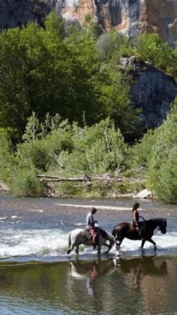 cheval dans riviere