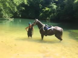 cheval dans lac