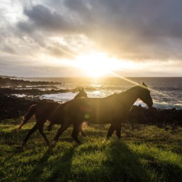 cheval soleil couchant